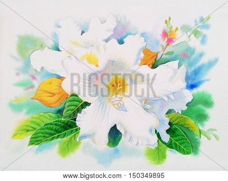 Watercolor painting original realistic white flower of easter lily vine and green leaves in white background. Original painting