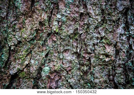 pine tree cortex texture - abstract natural background