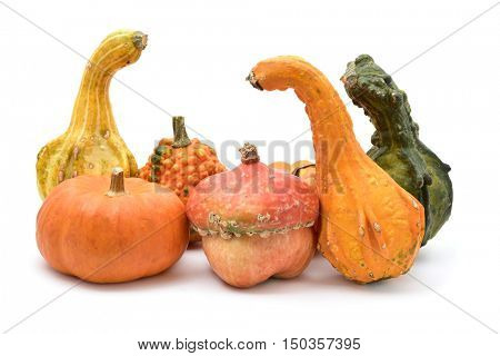 an assortment of different and peculiar pumpkins on a white background