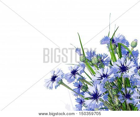 Cornflower. Flower bouquet. Wildflower posy isolated on white. 3D illustration