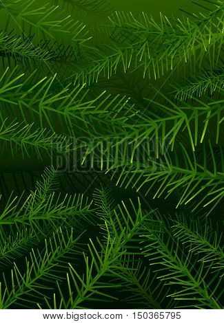 Vector tree pine branches background