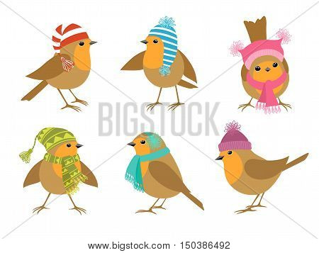 Funny Robins birds in winter hats isolated on white background.