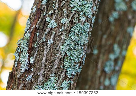 Treebark with moss, Green moss on old wood