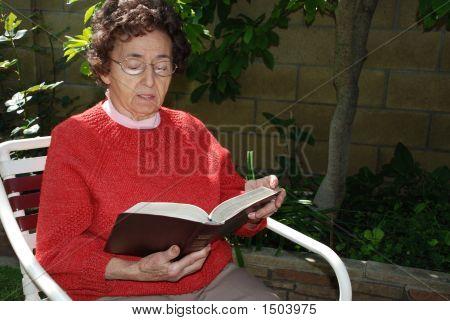 Grandmother Studies Bible In Garden