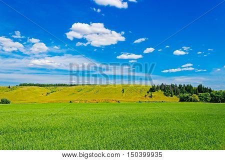 The green wheat field and clouds in the sky
