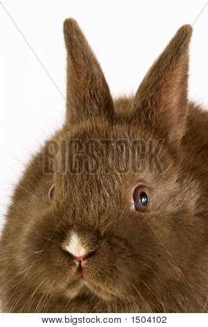 Baby Easter Bunny Rabbit On White Background.