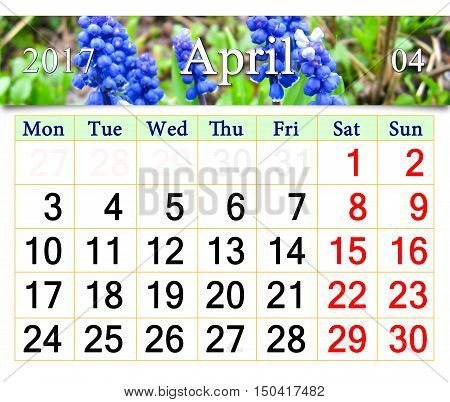 calendar for April 2017 with ribbon of blooming muscari