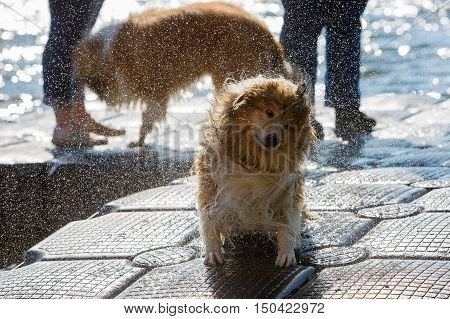 Wet Dog Shaking The Head