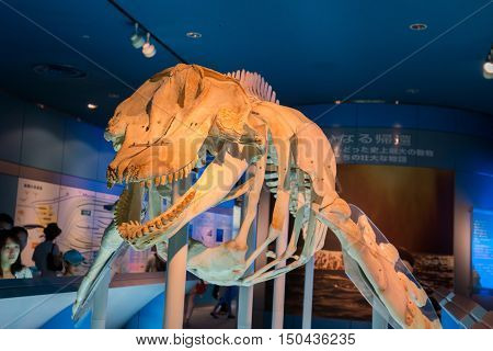 Aquarium And  Museum, Located In Port Of Nagoya,  Whales Skeletons.