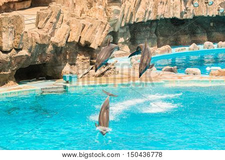 A Group Of Bottlenose Dolphins Performing A Jump Over Water.