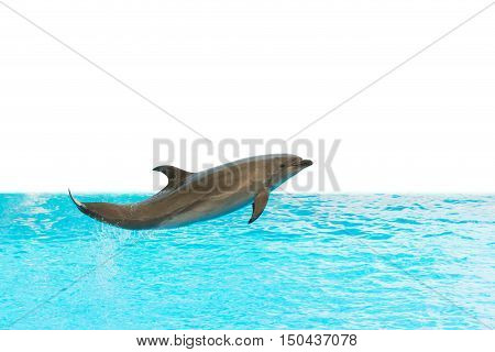 A Group Show Of Bottlenose Dolphins Performing A Jump Over Water.