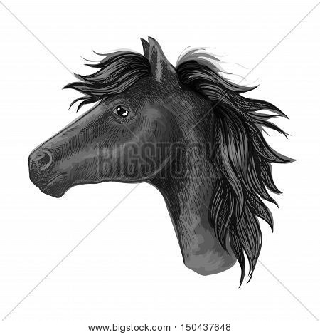 Black mare horse sketch of a head of purebred riding horse of arabian breed. Horse racing symbol, riding club badge or equestrian sport mascot design