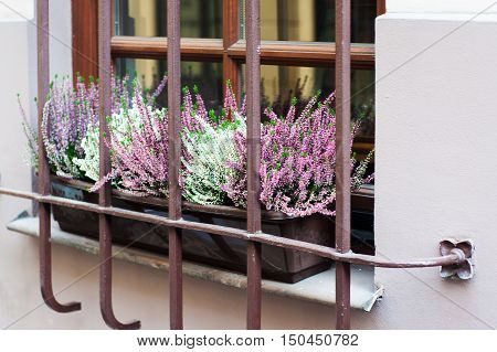 Flower Composition Of Pink Heather