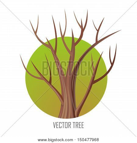 Isolated oak tree without leaves. Bare oak tree. Tree forest, leaf tree isolated, tree branch, plant eco branch tree, organic natural wood illustration. Autumn tree without leaves. Oak round icon.