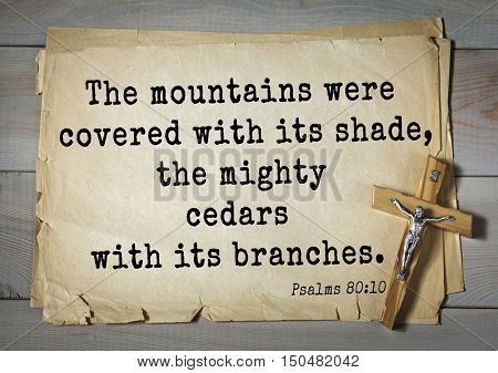 TOP-1000.  Bible verses from Psalms. The mountains were covered with its shade, the mighty cedars with its branches.