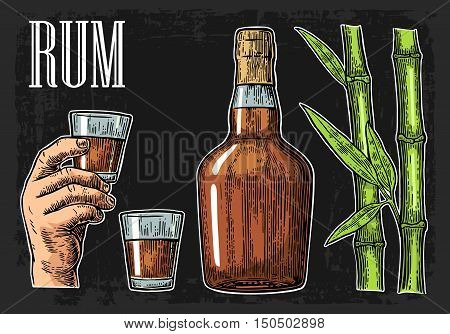 Glass and bottle of rum with sugar cane. Vintage color vector engraving illustration for label poster web invitation to party. Isolated on black background