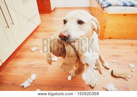 Naughty Dog Home Alone