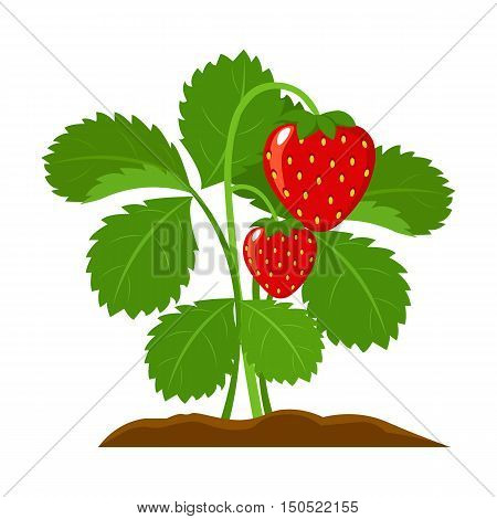 Strawberry icon cartoon. Single plant icon from the big farm, garden, agriculture collection.