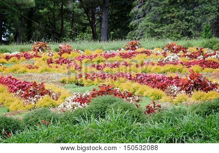 In the arboretum in the meadow grow beautiful ornamental flowers near the South trees and evergreen plants.