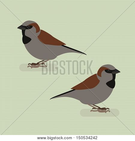 Sparrow bird on a branch. Isolated vector illustration of a flat