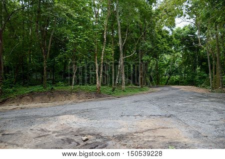 close up road in forest at Chonburi , Thailand