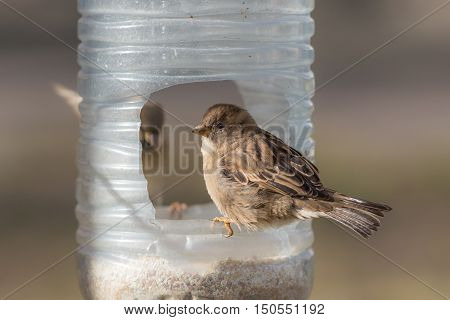 two sparrows sitting on a plastic trough