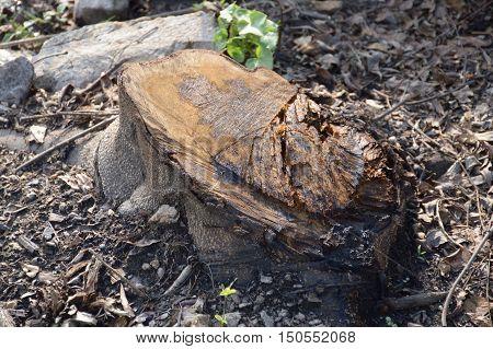 close up dry stump on the ground