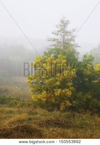thick fog falling on autumn landscape photo for micro-stock
