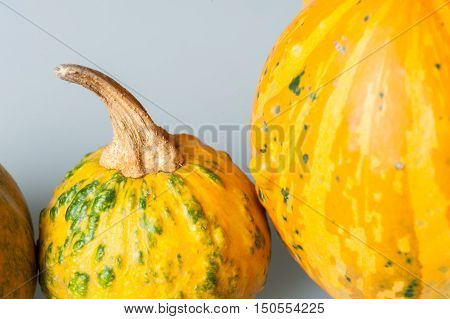 Row Of Various Organic Gourds Of Decorative Pumpkins