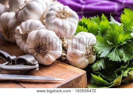 Garlic. Bunch of fresh garlic with celery herbs.
