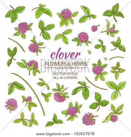 clover plant vector set on white background
