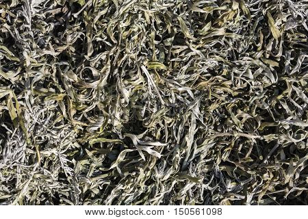 herbal medication, dry wormwood photo, herbal phytotherapy