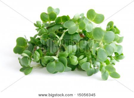 Water cress isolated on white
