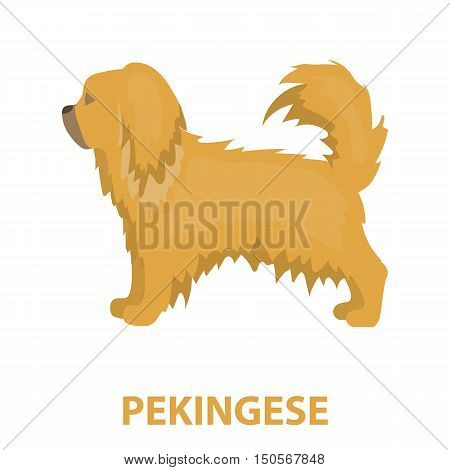 Pekingese rastr illustration icon in cartoon design