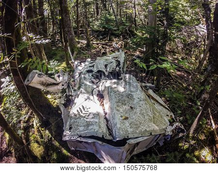 Old Plane Crash Slowly Dissolves In The Forest