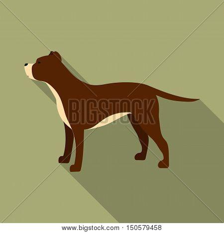 Pitbull raster illustration icon in flat design