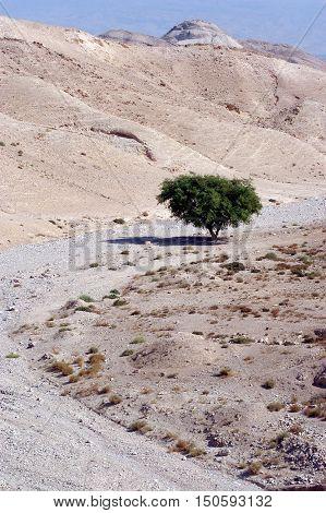 The Judean Desert - Israel