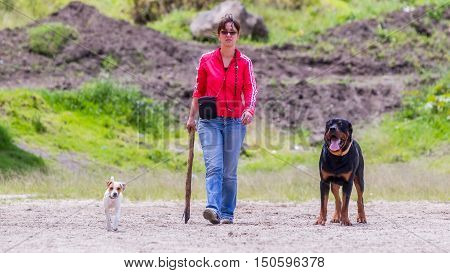 Portrait Of A Young Woman Walking With His Two Dogs A Male Rottweiler Dog And A Jack Russell Terrier Female Dog