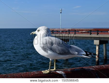 Photograph of a seagull sitting on the pier.