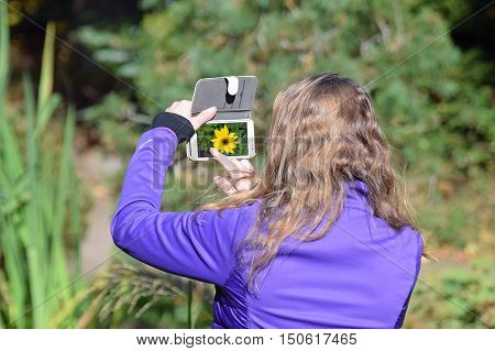 Woman taking picture of beautiful flower called Stiff Sunflower (Helianthus pauciflorus). Complementary colors: Purple jacket and yellow flower.