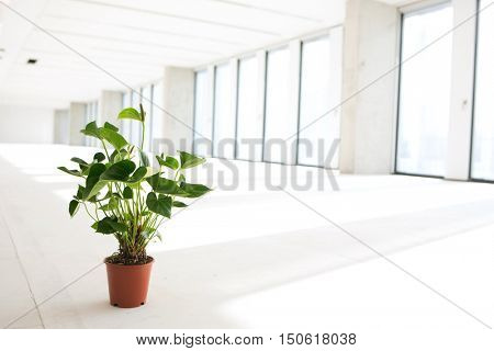 Potted plant in empty office space