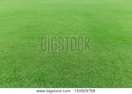 nature green grass field in the garden background