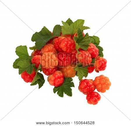 A handful of ripe berries cloudberry close-up isolated on white background