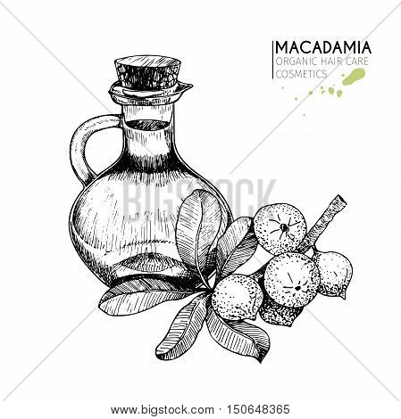 Vector set of hair care ingredients. Organic hand drawn elements. Macadamia branch bottle oil. Use for cosmetic package shop store products spa salon wellnes program procedure skin hair care