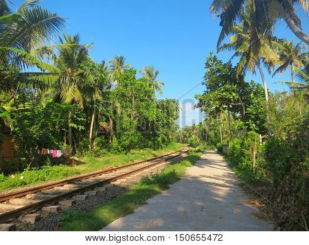 Railway in sunny palm trees forest, Weligama, Sri Lanka