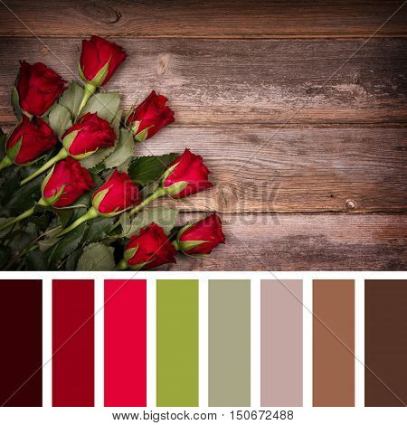 Red rose buds over old wood background. In a colour palette with complimentary colour swatches.