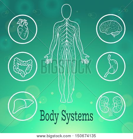 Human Body Organs Anatomical Conception Vector Illustration