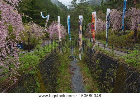 KAWAGUCHIKO, JAPAN - APRIL 28 , 2016 : Saiko Iyashi no Sato Nenba Old historical village  In the rainy season and pink Cherry blossom (Sakura). Kawaguchiko, Japan. APRIL 28 2016.