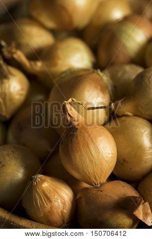 Organic Raw Yellow Pearl Onions
