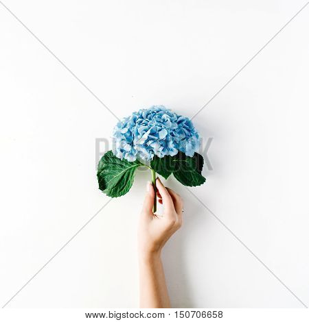 beautiful hydrangea flower in girl's hand isolated on white background. flat lay top view